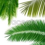 Link toCoconut tree leaf close-up 2 psd