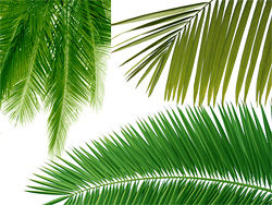 Link toCoconut tree leaves feature hd picture material (3p)