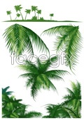 Link toCoconut tree series vector