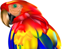 Link toColorful macaws, vector