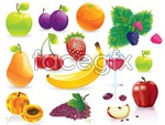 Common fruits vector