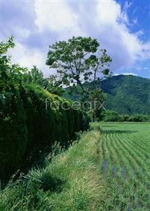 38 garden Country