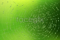 Link toCovered with drops of spider web vector