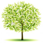 Link toCreative green tree design vector graphics 03 free