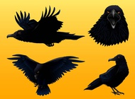 Link toCrow graphics set vector free