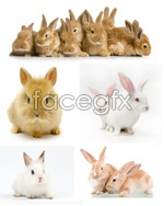 Link toCute bunny 2 psd
