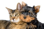 Link toCute cat and dog psd