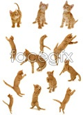 Link toCute kitten psd