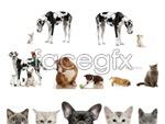 Link toCute kitten puppy psd
