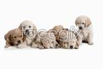 Link toCute little dog 01 psd