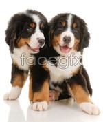 Link toCute little dog 02 psd
