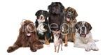 Link toCute little dog 05 psd