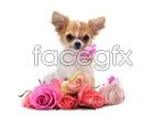 Link toCute pet dog psd