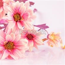 Link topicture flower pink Cute