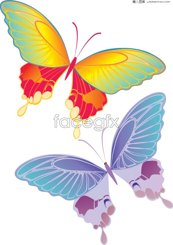 2 dancing colored Butterfly vector