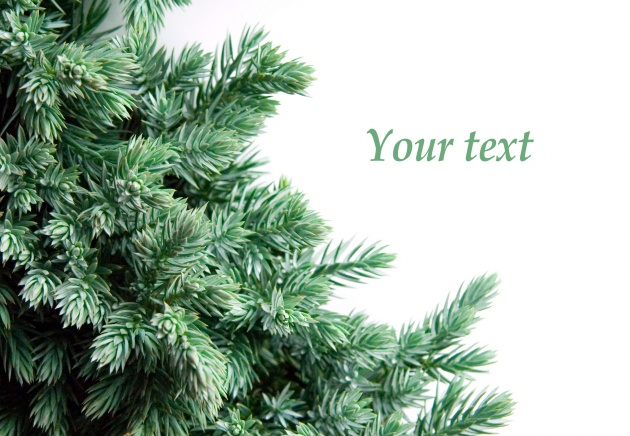 2012 Christmas card download