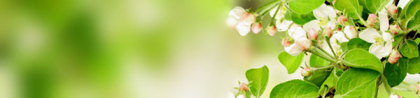 Beautiful banner background 01-HD pictures