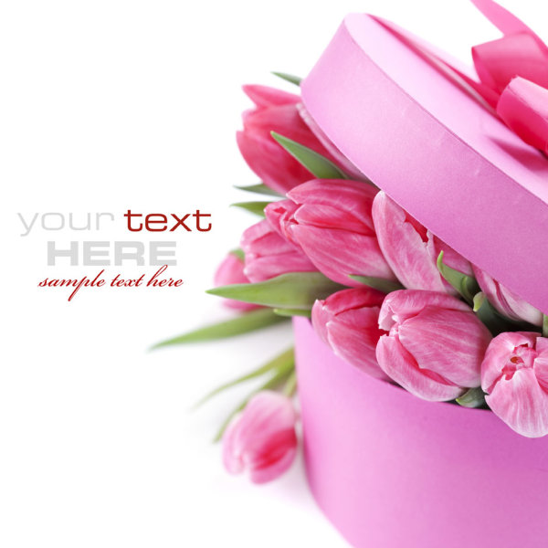 Beautiful flower background 03--HD pictures