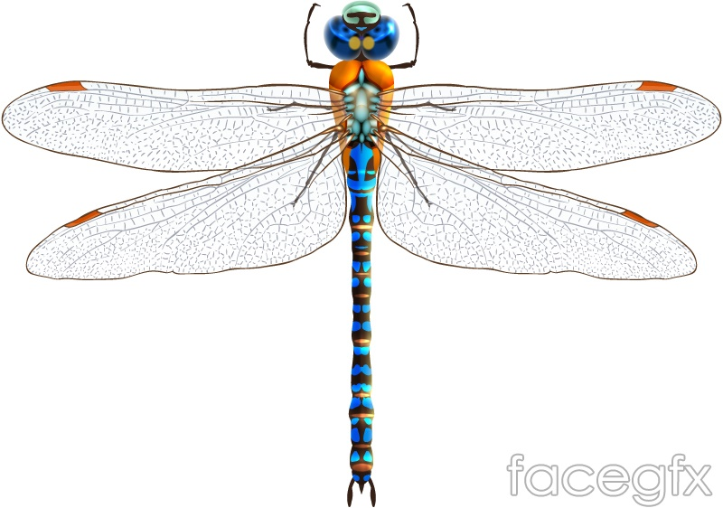 Blue Dragonfly design vector
