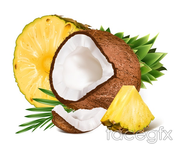 Coconut and pineapple vector over millions vectors stock photos coconut and pineapple vector free download coconut and pineapple vector toneelgroepblik Gallery