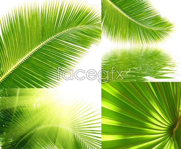 Coconut tree leaf close up psd over millions vectors stock coconut tree leaf close up psd free download coconut toneelgroepblik Image collections