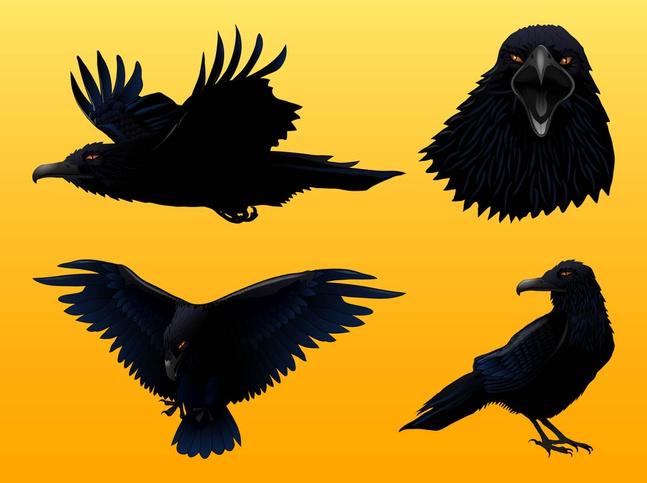 Crow graphics set vector free – Over millions vectors, stock photos