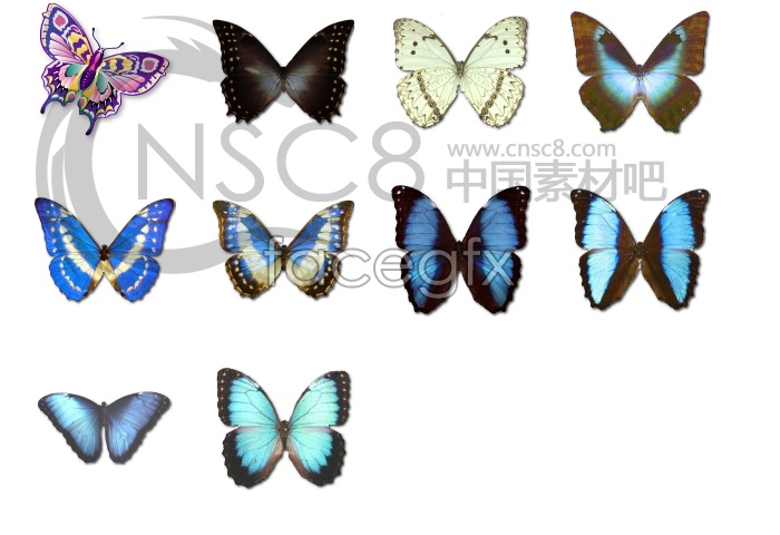 Cute butterfly icons