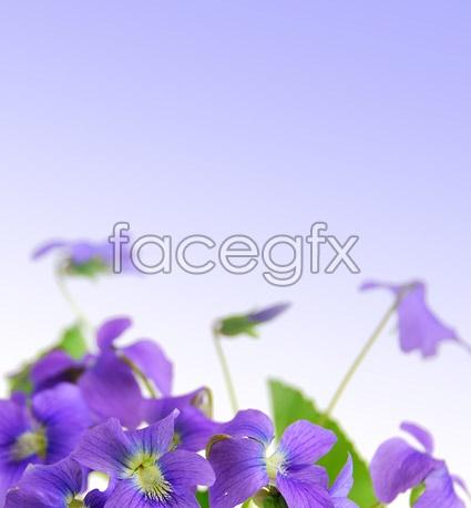 Elegant purple flowers PSD