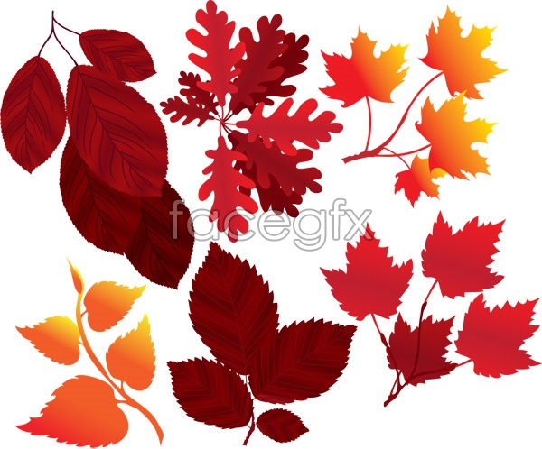 Falling leaves in autumn and winter the leaves vector