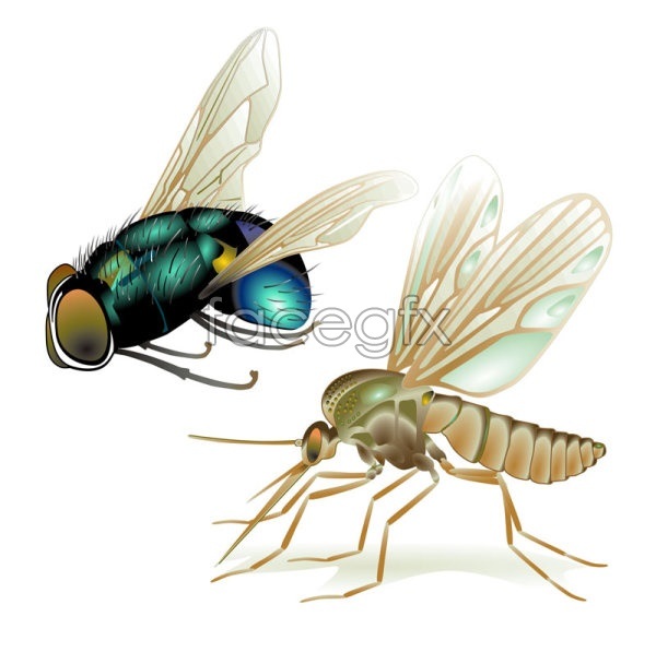 Flies and mosquitoes vectors over millions vectors stock photos flies and mosquitoes vectors free download free download flies and mosquitoes vectors toneelgroepblik