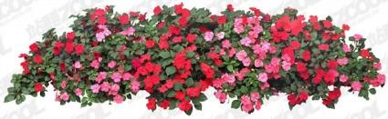 flowers psd layered 2