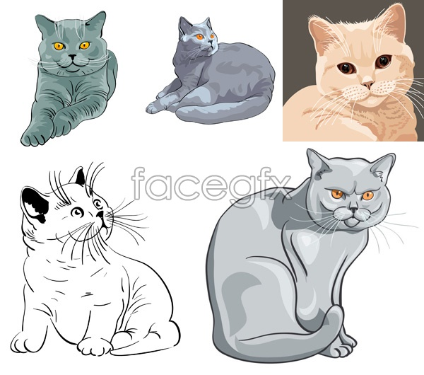 Footage of animals cats vector