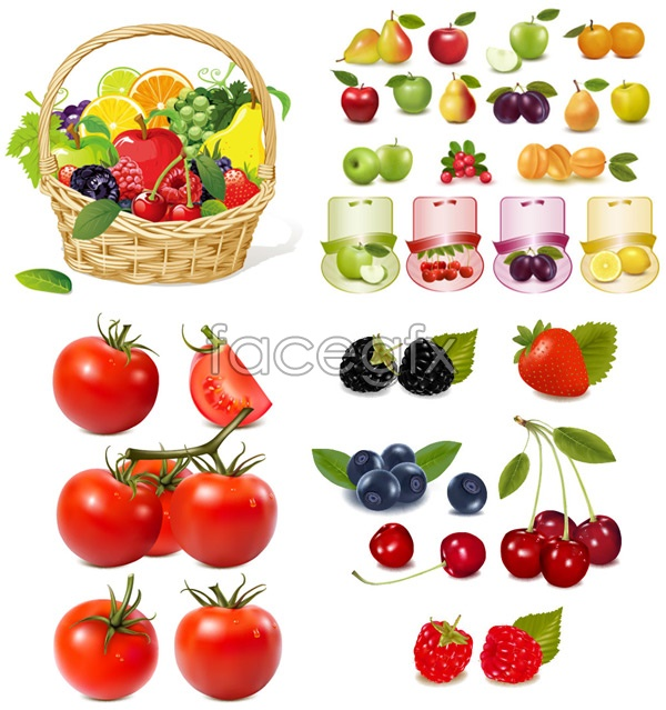 Fruit pictures vector