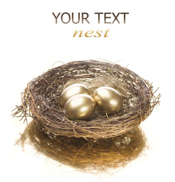 Golden egg nest 05--HD pictures