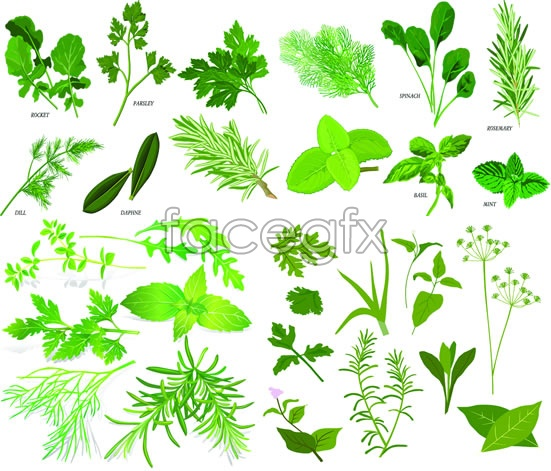 Herbs of Chinese herbal medicine vector