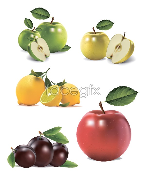 Hyper-realistic fruit vector