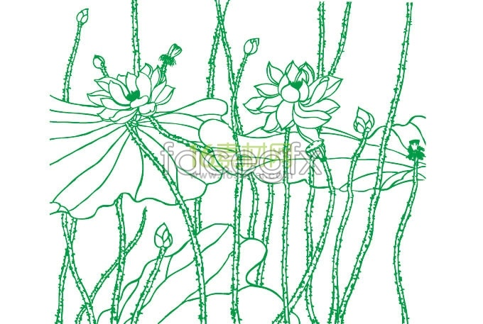 Lotus Flower Line Drawing Vector Free Download : Line drawing in lotus flowers leaf vector over