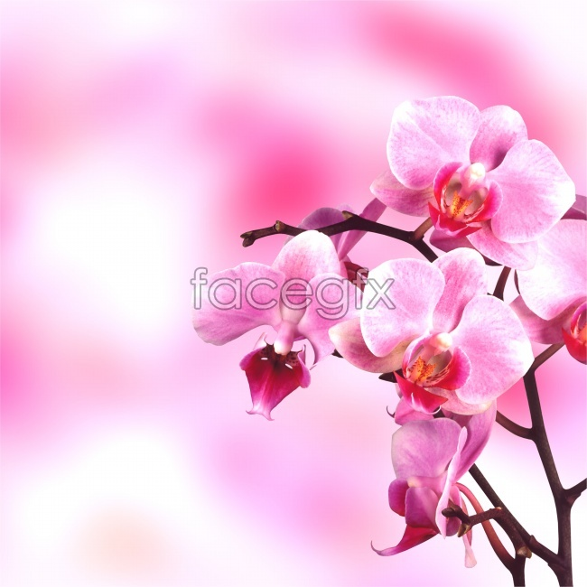 Luxurious orchids high definition pictures