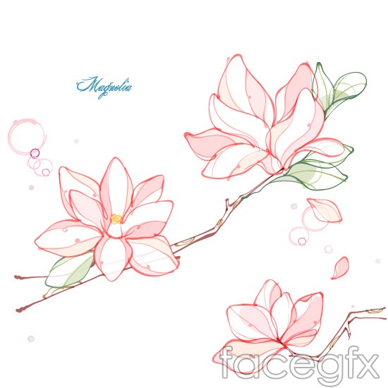 Magnolia Flower Line Drawing : Magnolia flower line drawing vector over millions