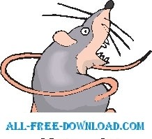 Rat Chasing Tail