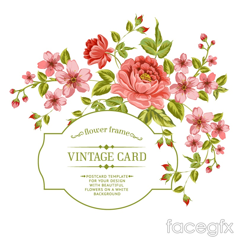 Red Rose Apricot Flower Cards Vector Over Millions