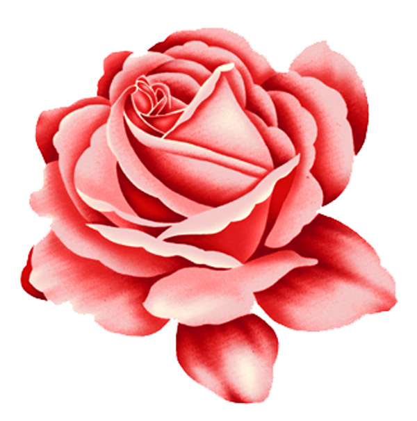 Rose Red Rose Design Psd Over Millions Vectors Stock