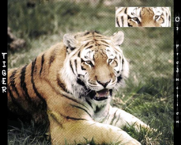 Tiger inside my art …