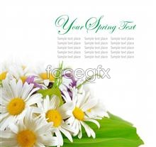Link toimage cover card Daisy