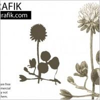 Link toDandelion flower vector