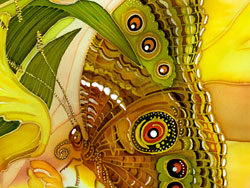 Link toDazzling butterflies 01-hd pictures
