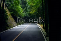 Link toDeep forest roads high definition pictures