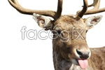 Link toDeer picture material psd