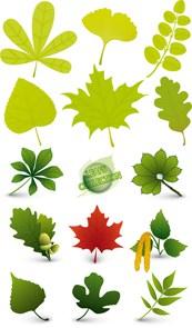 Link toDifferent plant leaf vector