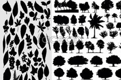 Link tovector silhouette leaves and trees of types Different